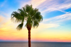 A palm tree at sunset. Beautiful warm colors of the sunset with a palm tree in the foreground Stock Photo