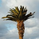 Palm tree at sunset. Closeup view Royalty Free Stock Photography