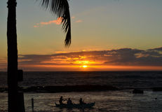 Palm Tree sunset Stock Image