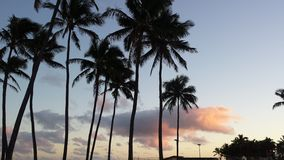 Palm tree at sunset. Kapaa beach park Royalty Free Stock Photos
