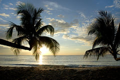 Palm tree in sunset, Kho Kood Thailand Royalty Free Stock Photo