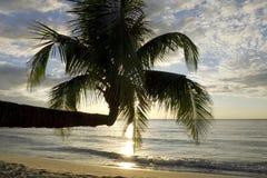 Palm tree in sunset, Kho Kood Thailand Royalty Free Stock Image