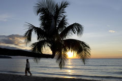Palm tree in sunset, Kho Kood Thailand Royalty Free Stock Images