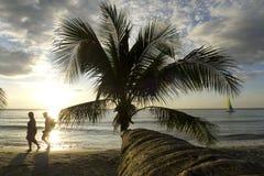 Palm tree in sunset, Kho Kood Thailand Royalty Free Stock Photos
