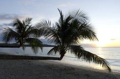 Palm tree in sunset, Kho Kood Thailand Stock Image