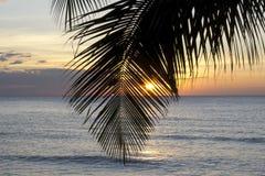 Palm tree in sunset, Kho Kood Thailand Stock Photography