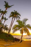 Palm Tree Sunset Kihei Maui royalty free stock photo