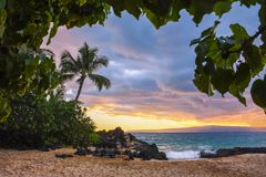 Palm Tree in the Sunset in Makena Kove Maui Hawaii stock photos