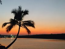 Palm tree at sunset near Chapora river in Goa royalty free stock photography