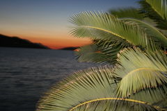 Palm tree. At sunset in neum Stock Photography