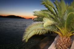 Palm tree. At sunset in neum Stock Image