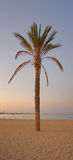 Palm tree sunset panorama stock image
