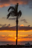 Palm tree sunset with person sitting on a bench looking out to s Stock Photos