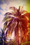 Palm tree at sunset, retro stylized with old film effect Stock Images