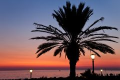 Palm tree on sunset sea beach Stock Image