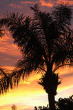 Palm tree sunset silhouette Royalty Free Stock Photography