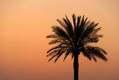 Palm tree at sunset Stock Photos