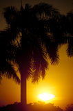 Palm Tree in the Sunset. Silhouette of a palm tree against a backdrop of the setting sun Stock Photo