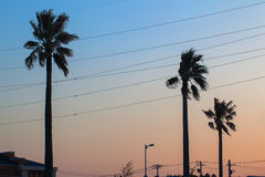 Palm tree and sunset sky color Royalty Free Stock Image