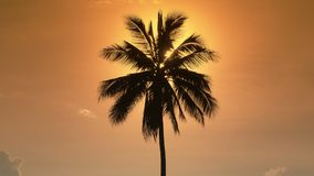 Palm tree at sunset. The sun hides behind a lonely palm tree in the yellow evening sky. Palm tree at sunset. The sun hides behind a lonely palm tree in the stock video