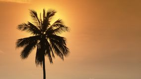 Palm tree at sunset. The sun hides behind a lonely palm tree in the yellow evening sky. Palm tree at sunset. The sun hides behind a lonely palm tree in the stock footage