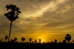 Palm tree on sunset Royalty Free Stock Photography