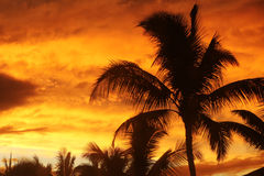 Palm tree with sunset. Palm trees silhouetted against the sunset Royalty Free Stock Photos