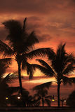 Palm tree with sunset. Palm trees silhouetted against the sunset Stock Photos