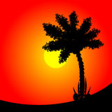 Palm tree at sunset. Royalty Free Stock Photography