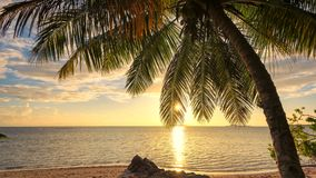 Palm tree at Sunset in tropical beach. royalty free stock photos