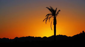 Palm Tree at Sunset stock video footage