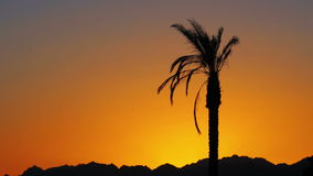 Palm Tree at Sunset. Tropical Palm Tree at Sunset. One long silhouette of palm trees on a background of red and orange sunset sky and the outlines of the stock video footage