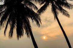 Palm Tree and Sunset at twilight time , Silhouette Royalty Free Stock Images