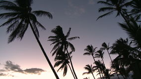 Palm tree sunset stock video