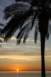 Palm tree, sunset view. Summer nature scene. Maldives. Palm tree, sunset view. Summer nature scene Royalty Free Stock Photos