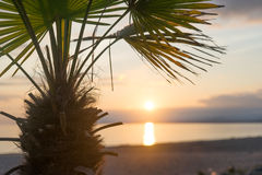 Palm tree at sunset Royalty Free Stock Images