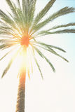 Palm tree  and sunshine. Single tropical palm tree  and sunshine in blue sky, retro toned Royalty Free Stock Images