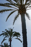 Palm tree and sunshine Royalty Free Stock Photos