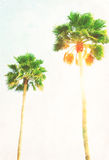 Palm tree  and sunshine. Two palm tree and sunshine in blue sky, retro toned Royalty Free Stock Photography
