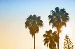 Palm tree and sunside Royalty Free Stock Image