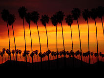 Palm Tree Sunst stock photos