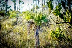 palm tree in swamp stock photos
