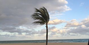 A Palm Tree Swaying on the Beach Stock Photos