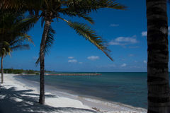 Palm tree swaying on the white sand beach. Of Mexico Royalty Free Stock Photo