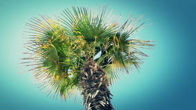 Palm tree swaying in the wind against a blue sky stock video footage