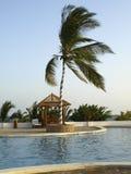 Palm tree on swimming pool. An african palm tree next to a beautiful hotel swimming pool in Watamu, Kenya, Africa stock photo