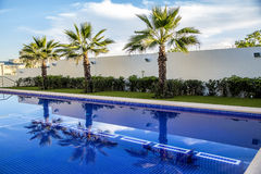 Palm tree and swimming pool Stock Photos