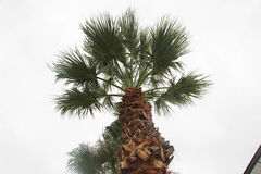The Palm Tree Stock Photo