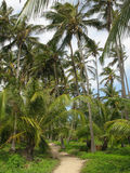 Palm tree in Tayrona Stock Photos