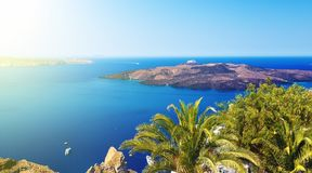 Palm tree on terrace with sea view in Firostefani village, Santorini island, Greece Stock Photo